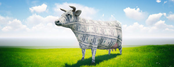 Guest Vlogger, Russ Laggan Asks: Are You Milking the Cow or Creating a Cash Cow?
